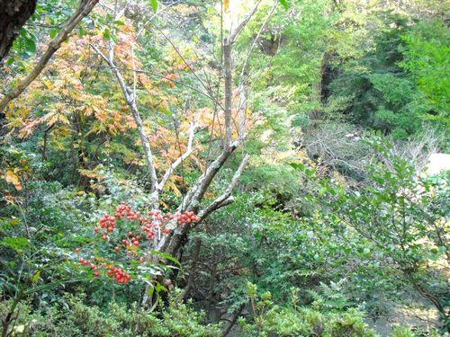 06) 鎌倉「光則寺」_冬