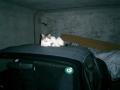 03) シャッター開閉時の騒音を考慮して開けっ放しにしているけど、クソし