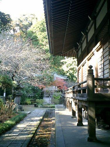 05) 鎌倉「安国論寺」紅葉の季節