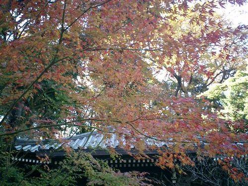07) 鎌倉「安国論寺」紅葉の季節