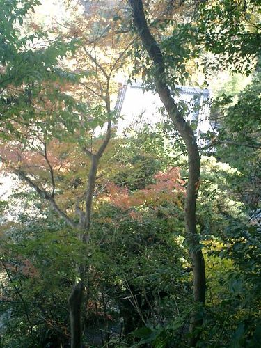 09) 鎌倉「安国論寺」紅葉の季節
