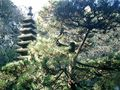 06) 鎌倉「安国論寺」紅葉の季節