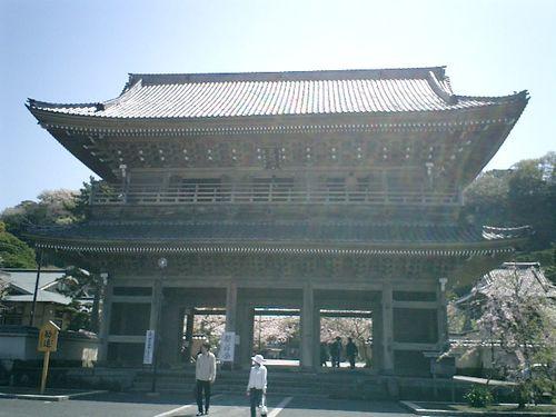01)鎌倉市材木座「光明寺」山門。観桜会の日、特別山門拝観¥300_1