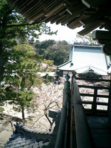 04)鎌倉市材木座「光明寺」山門の上から「本堂」方向を見る
