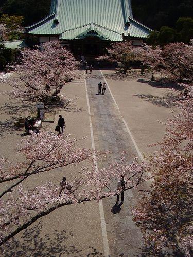 05)鎌倉市材木座「光明寺」山門の上から「本堂」方向を見る
