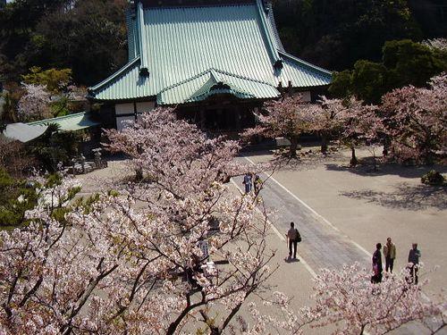 06)鎌倉市材木座「光明寺」山門の上から「本堂」方向を見る