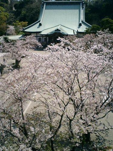 07)鎌倉市材木座「光明寺」山門の上から「本堂」方向を見る