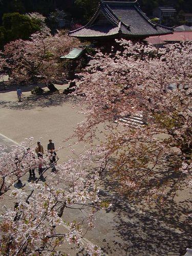 08)鎌倉市材木座「光明寺」山門の上から「鐘楼」方向を見る