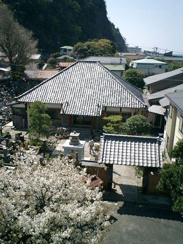 14)鎌倉市材木座「光明寺」山門の上から「蓮乗院」を見る。寺の歴史は「