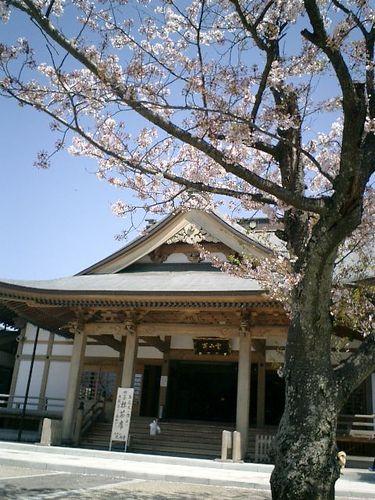 17)鎌倉市材木座「光明寺」開山堂で抹茶席が設けられていた