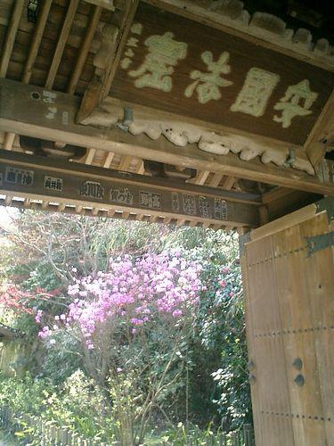 01)鎌倉市大町「安国論寺」桜の季節