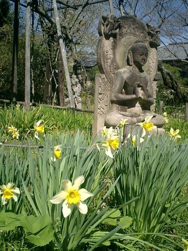 08)鎌倉市大町「安国論寺」桜の季節