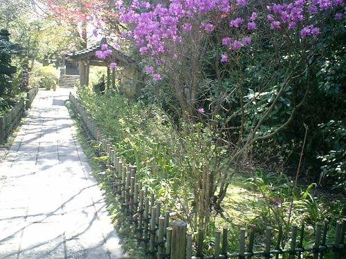 14)鎌倉市大町「安国論寺」桜の季節