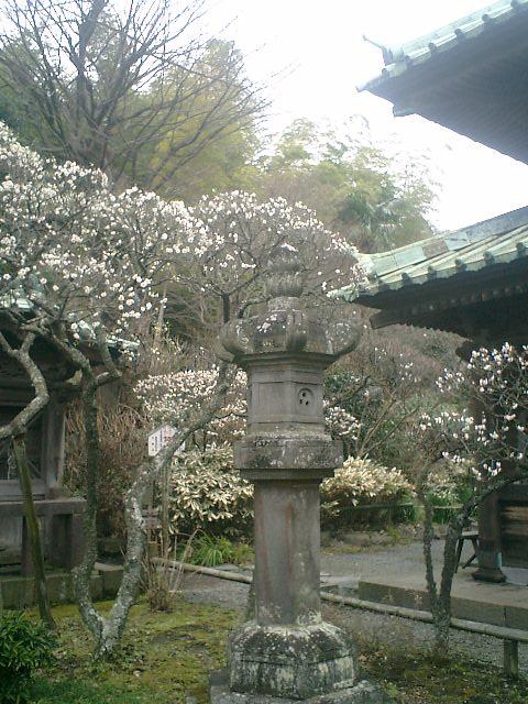 09) 鎌倉「英勝寺」_仏殿(寳珠殿)正面側の燈籠。撮影場所背後が山門復興現場柵で窮屈なので、これで代用として撮った。