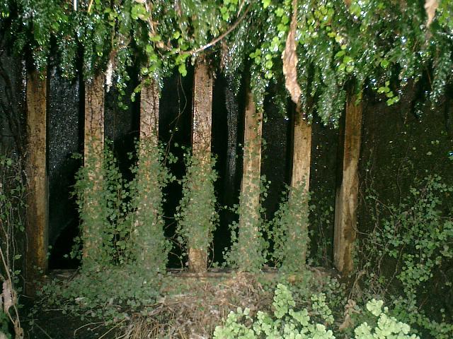 38) 鎌倉「英勝寺」_竹の中庭、水琴洞