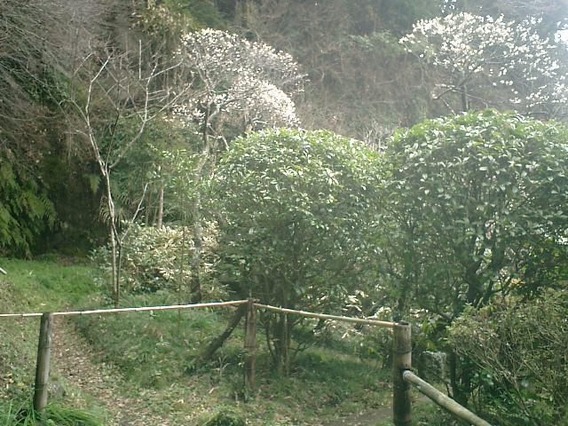 39) 鎌倉「英勝寺」_竹の中庭を通って、書院裏最奥場所付近。