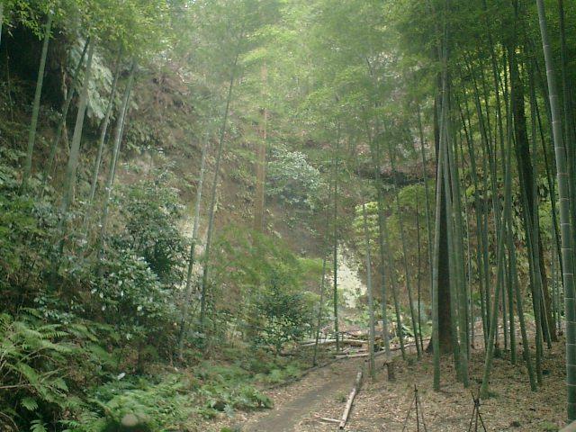 42) 鎌倉「英勝寺」_本来の順路へ合流して、41)を撮った方向を見る。