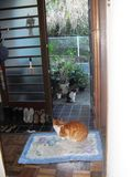 01) 毎度のごとく玄関からあがって待つ ' キキ ' と、外で私を待つ ' ステッペンウルフ '。