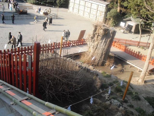 D02) 鎌倉「鶴岡八幡宮」