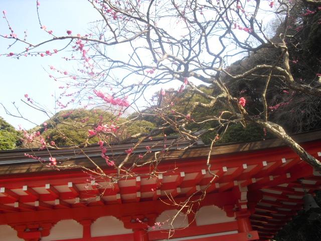 D07) 鎌倉「荏柄天神社」梅の頃