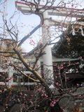 E02) 「鎌倉宮」梅の頃