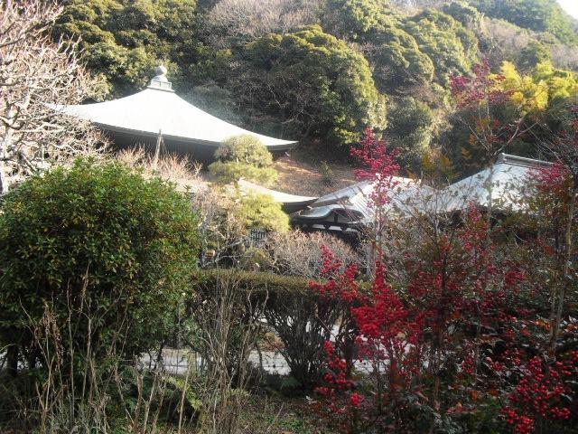 F13) 鎌倉「瑞泉寺」梅の頃」