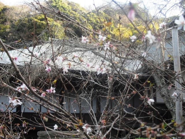 F23) 鎌倉「瑞泉寺」梅の頃」