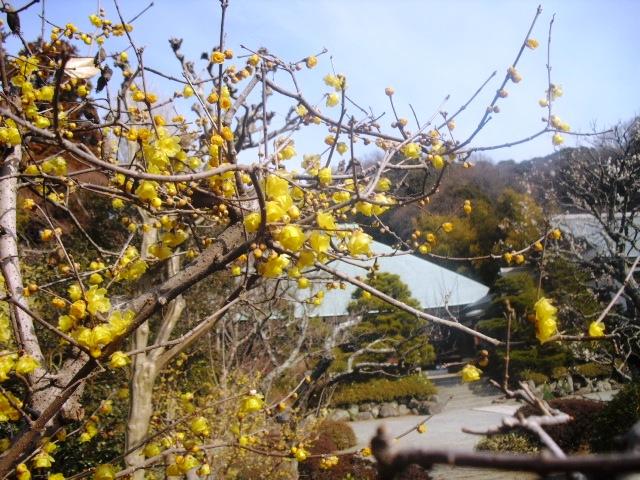 I12) 鎌倉五山第五位「浄妙寺」梅の頃