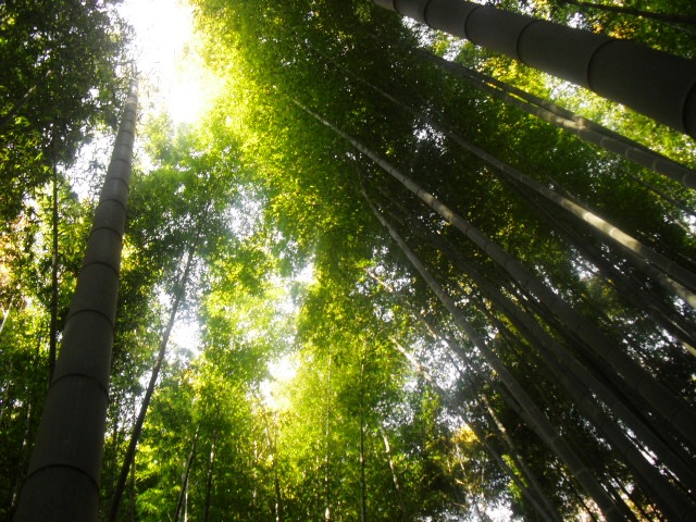 J05) 竹林庭園の寺「報国寺」