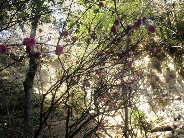 J08) 竹林庭園の寺「報国寺」