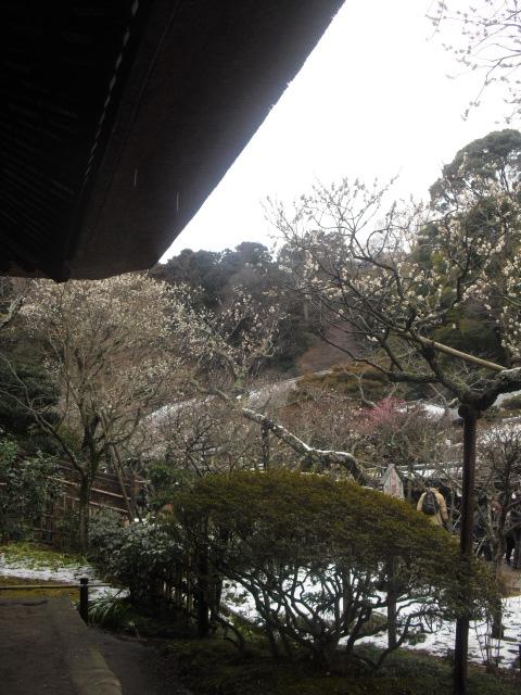 08) 雪の日、鎌倉「東慶寺」梅の頃。11.02.12