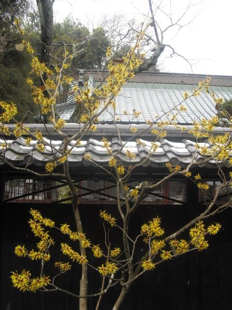17) 雪の日、鎌倉「東慶寺」梅の頃。11.02.12