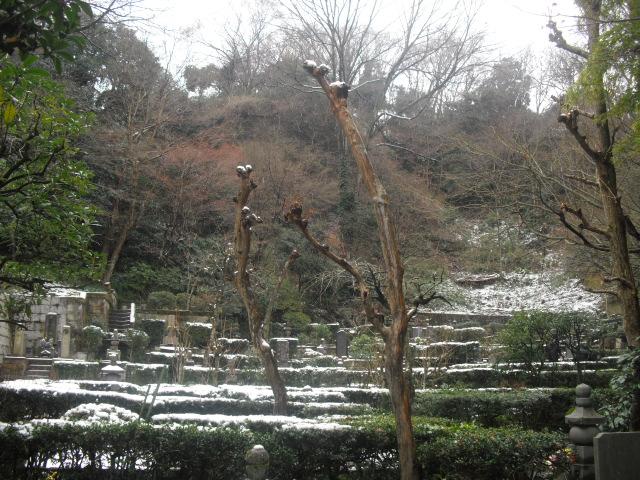 29) 雪の日、鎌倉「東慶寺」梅の頃。11.02.12