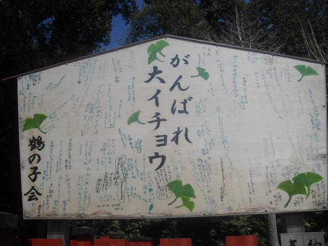 07) 「がんばれ 大イチョウ」