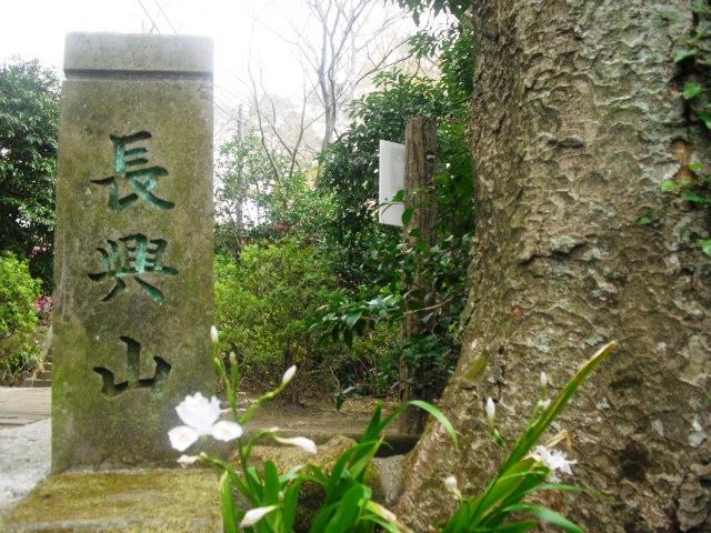 02)  謹んで参拝祈願いたしました。鎌倉「妙本寺」桜満開の頃。_  11.04.10