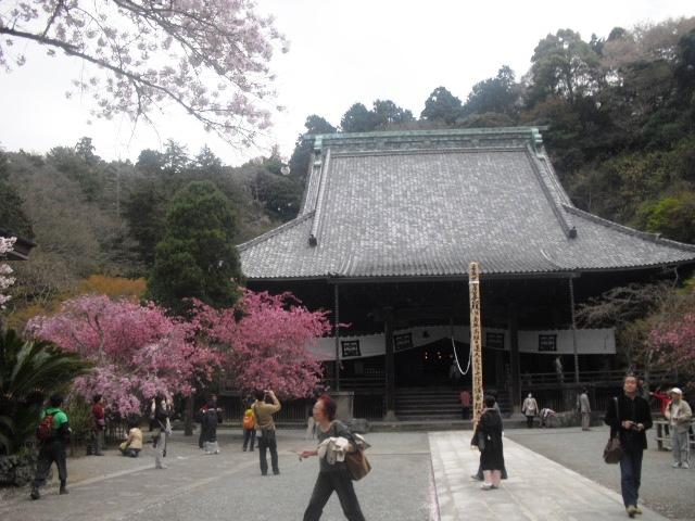 09)  謹んで参拝祈願いたしました。鎌倉「妙本寺」桜満開の頃。_  11.04.10