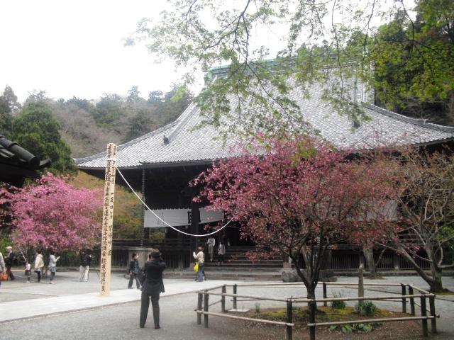 10)  謹んで参拝祈願いたしました。鎌倉「妙本寺」桜満開の頃。_  11.04.10