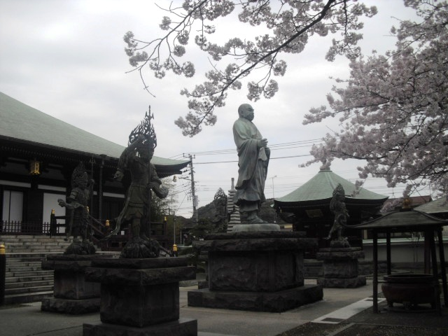 06) 境内の桜 _ 「長勝寺」