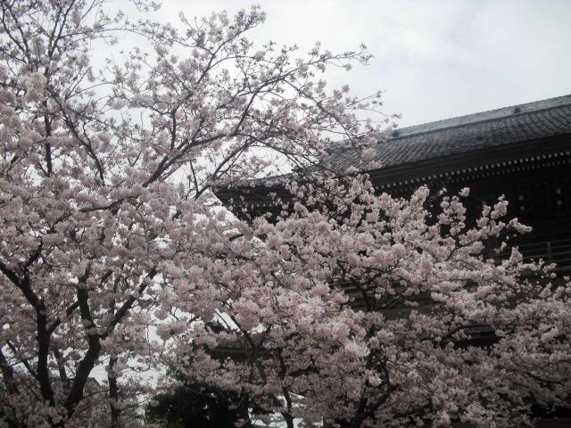 08)  浄土宗大本山 「天照山 光明寺」 _ 鎌倉市材木座