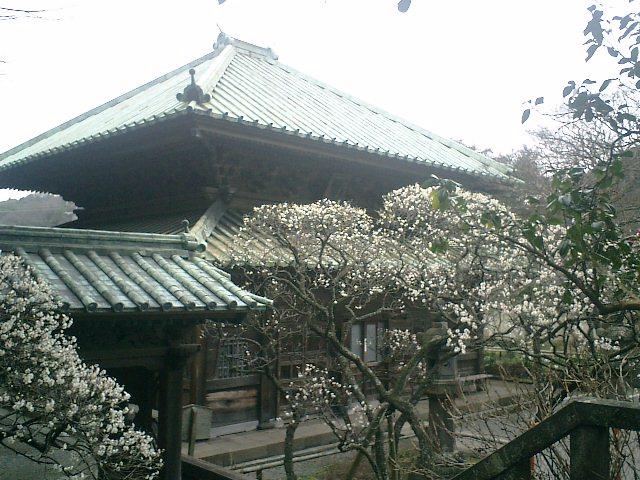 30) 鎌倉「英勝寺」_祠堂(を保護する鞘堂)の前から仏殿を観る