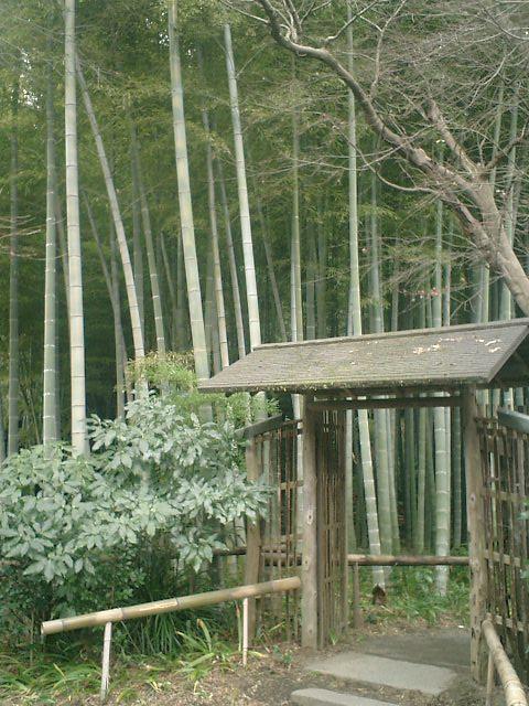34) 鎌倉「英勝寺」_竹の中庭入口