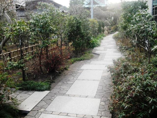 C02) 鎌倉「大巧寺」黄梅が咲く頃