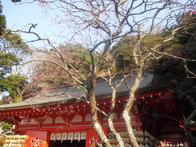 D06) 鎌倉「荏柄天神社」梅の頃