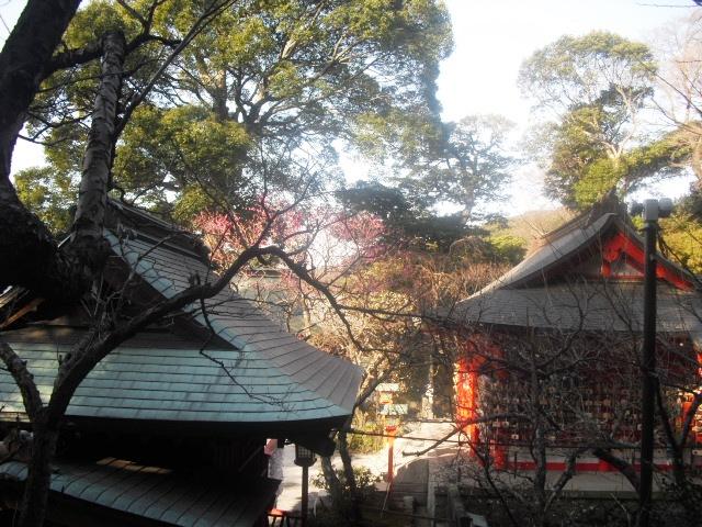 D09) 鎌倉「荏柄天神社」梅の頃