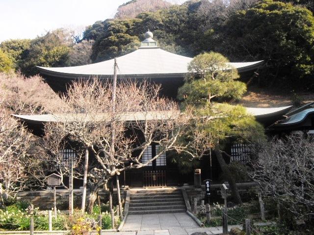F05) 鎌倉「瑞泉寺」梅の頃」