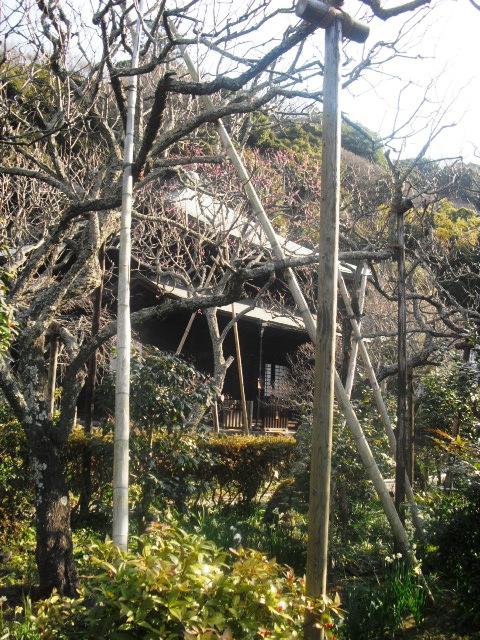 F12) 鎌倉「瑞泉寺」梅の頃」