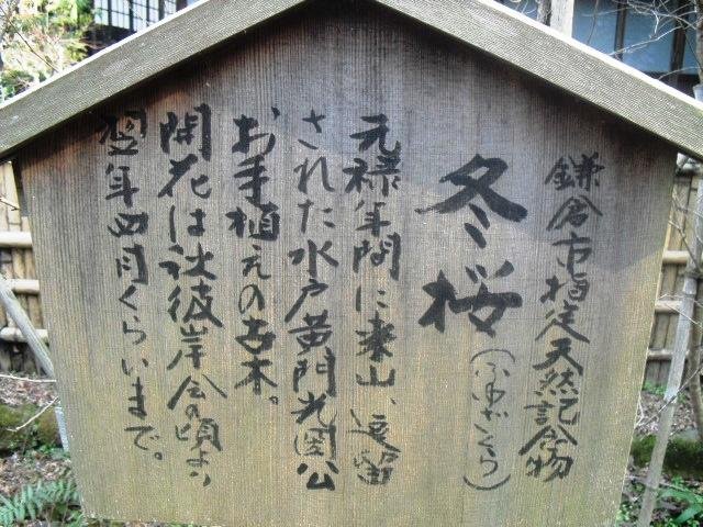 F22) 鎌倉「瑞泉寺」梅の頃」