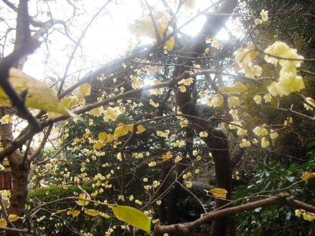 J07) 竹林庭園の寺「報国寺」
