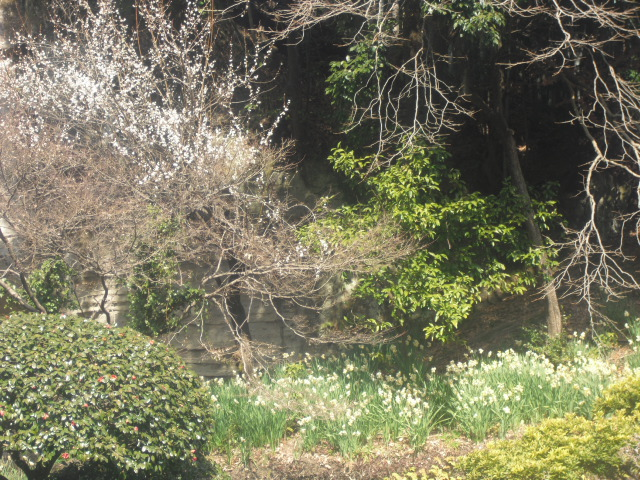 J10) 竹林庭園の寺「報国寺」