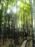 J04) 竹林庭園の寺「報国寺」